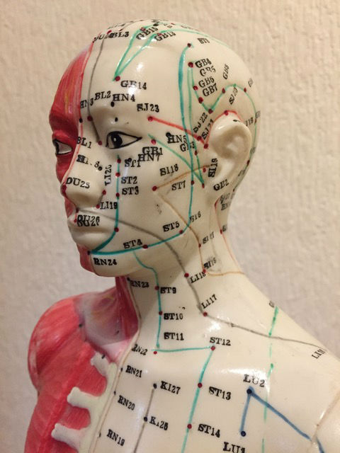 acupuncture doll meridian head