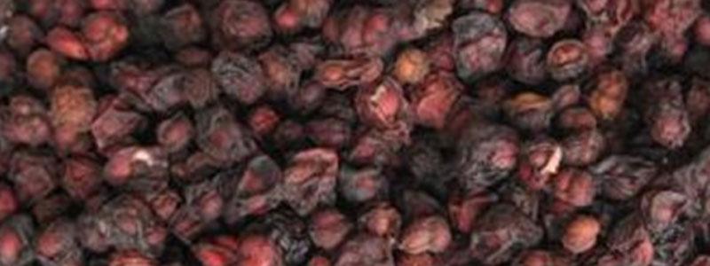 Wu wei zi (Schisandra fruit) (Schisandrae Fructus):- sour, warm